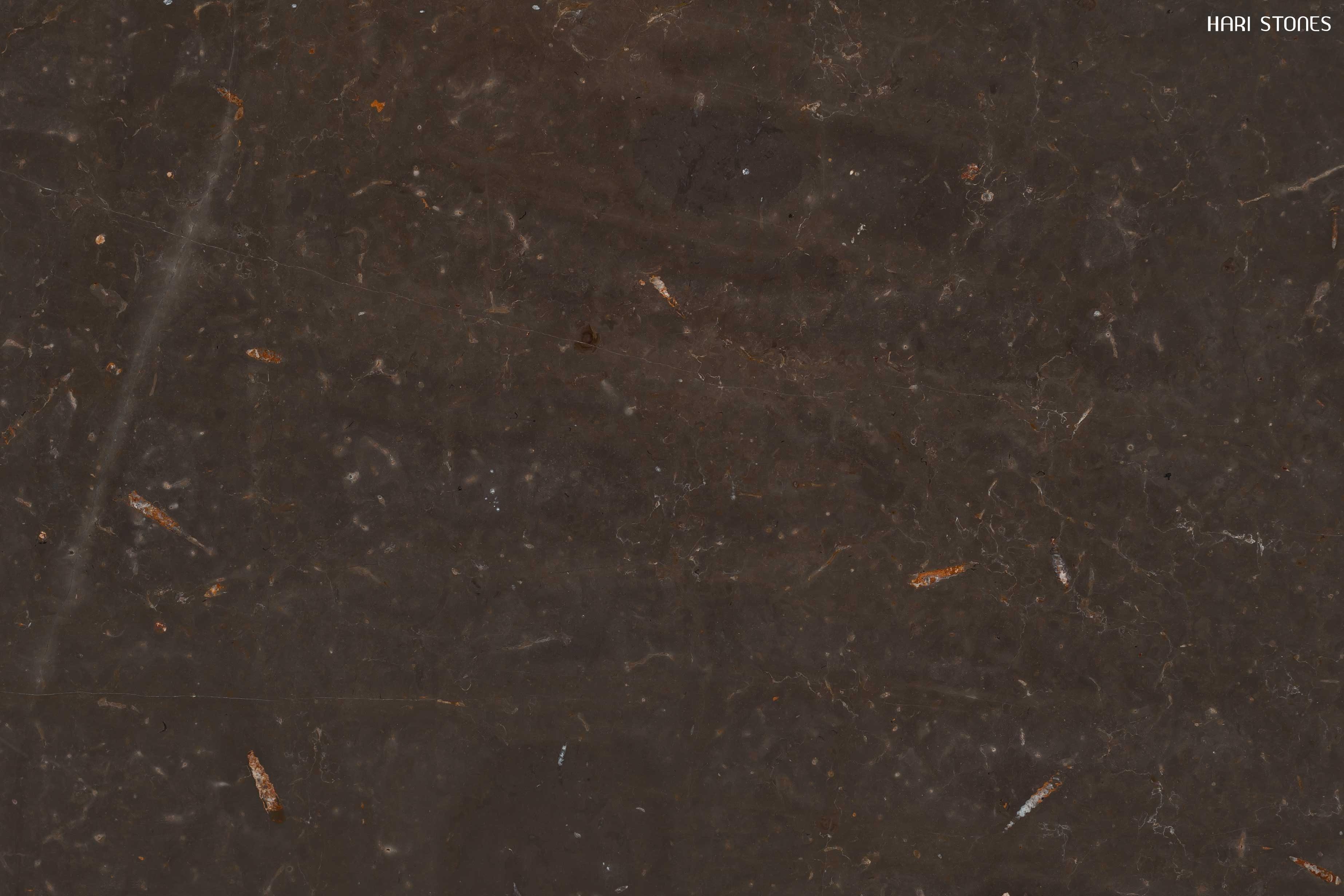 Jurassic Brown Marble Slabs Distributors