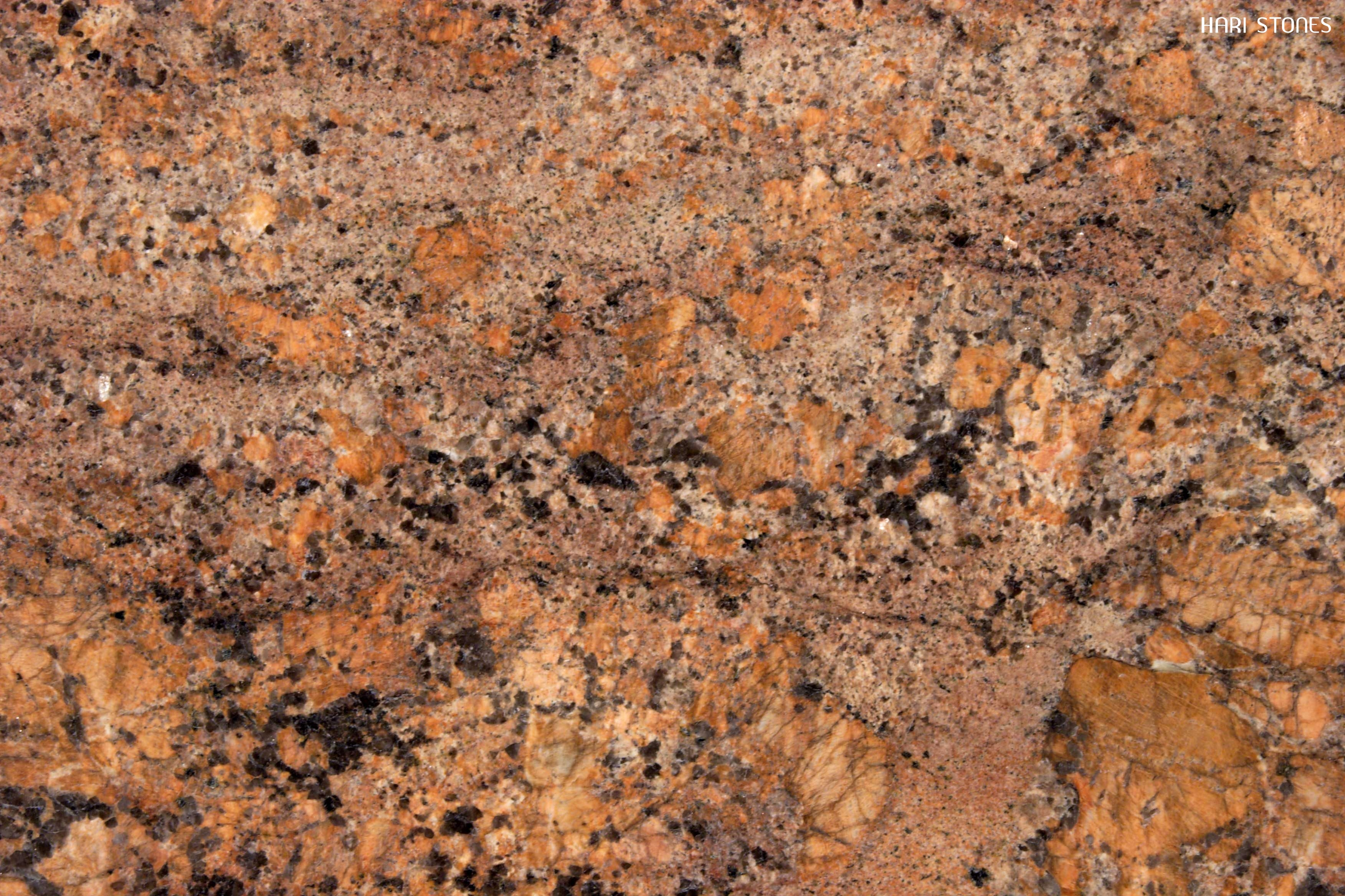 Juprana Bordeaux Granite Slabs Distributors